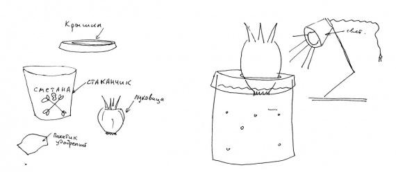 гидропоника как вырастить дома