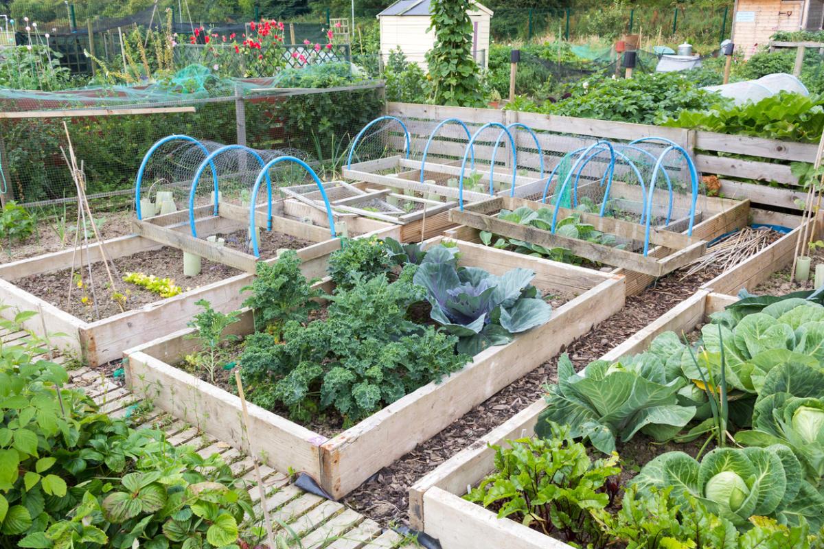 огород с парником и грядками