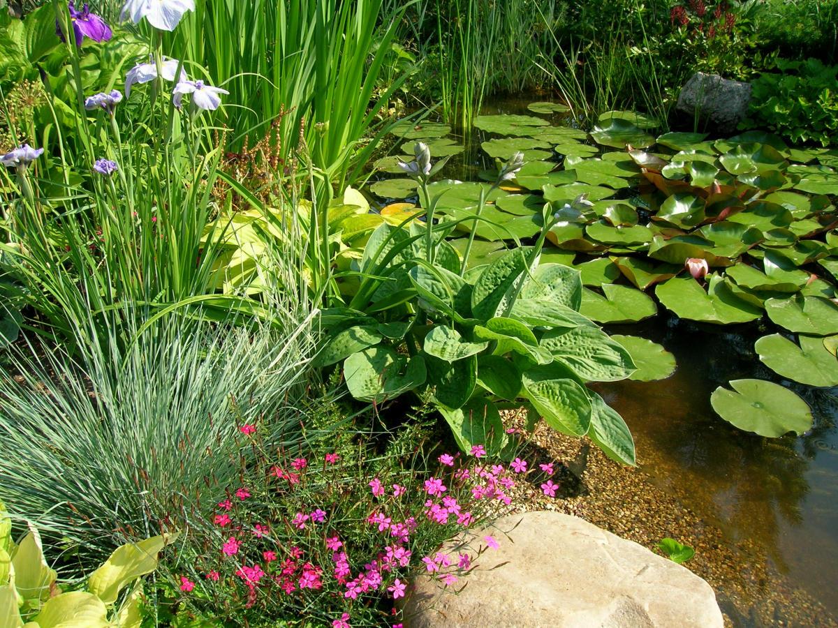 свет для водных растений