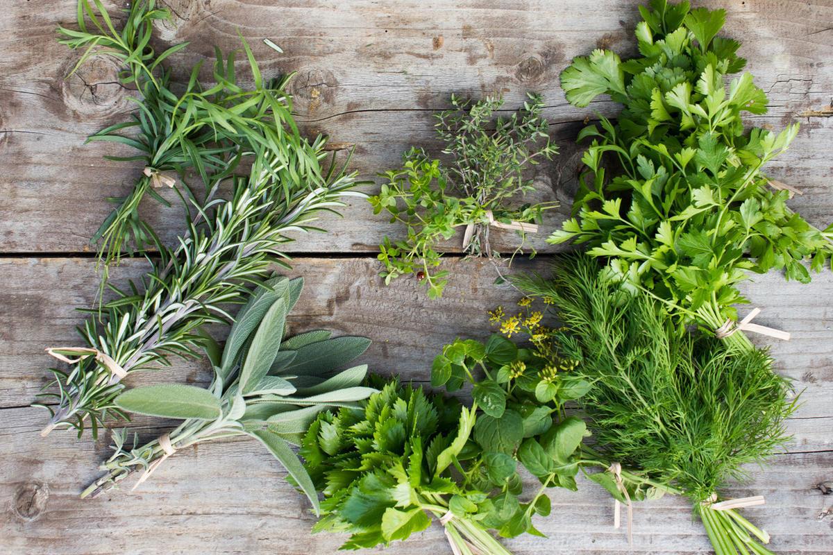 Дачные травы и их названия с фото