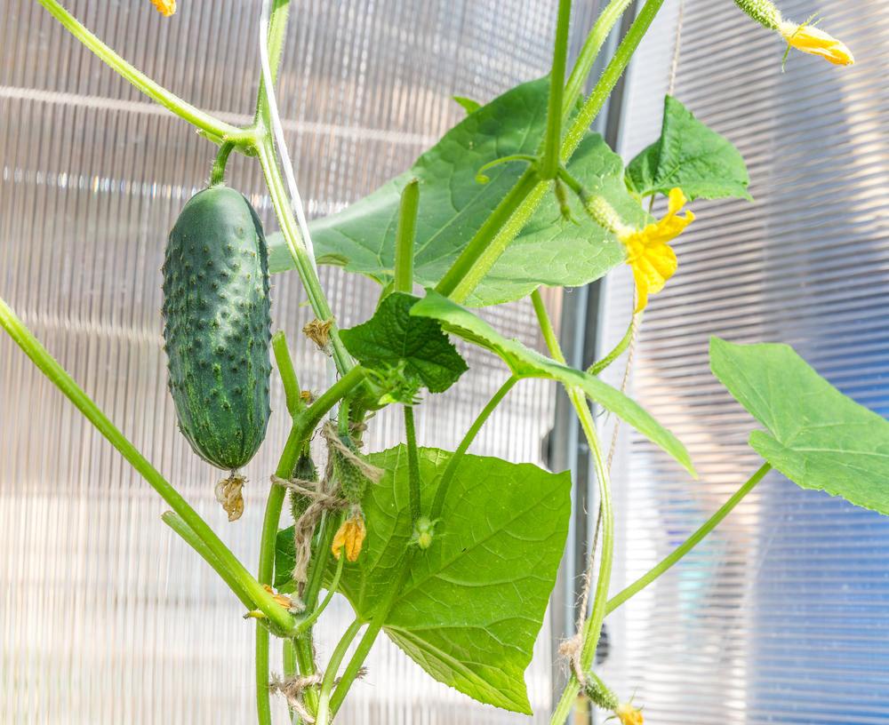 Домашний огород: 6 овощей, которые вы можете вырастить на по.