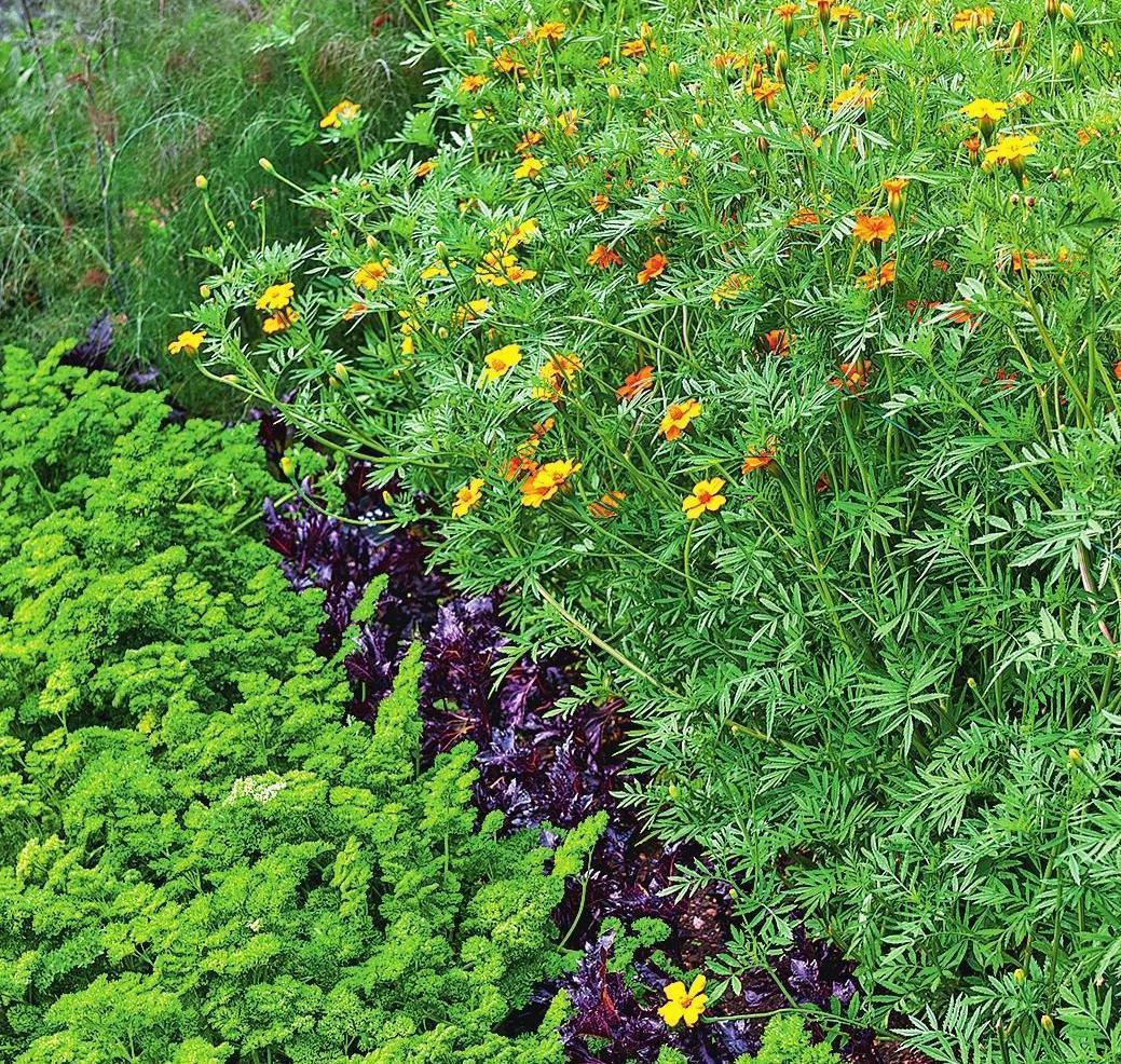 многие дачные травы и их названия с фото моцарт, через