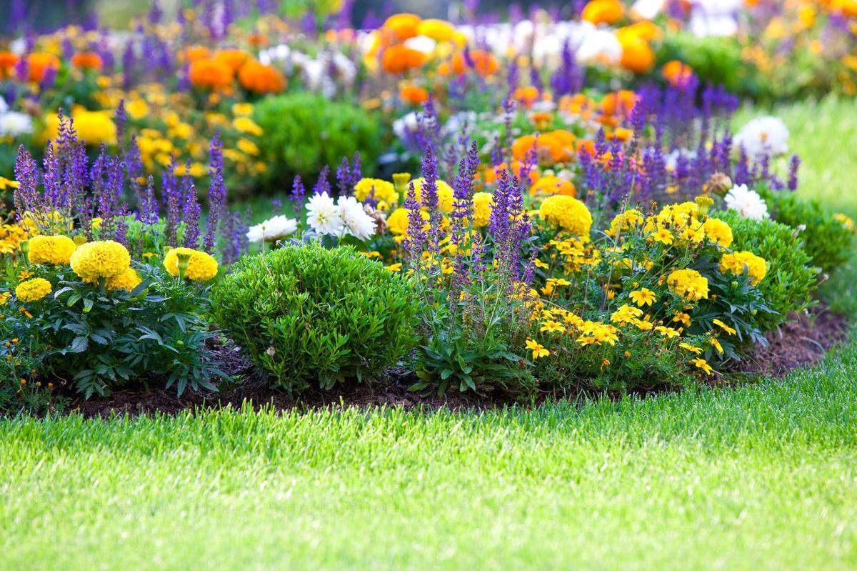 Яркие краски в саду