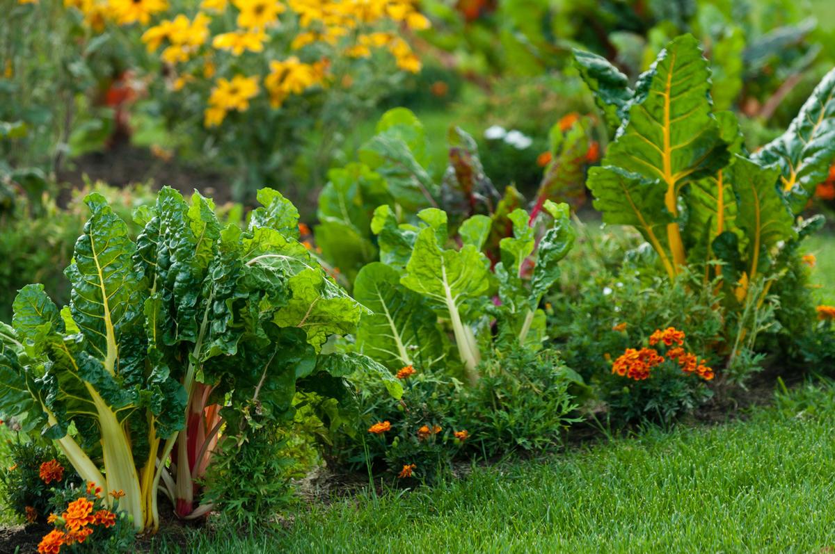 Декоративные огороды