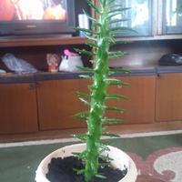 Подскажите, как называется этот цветок или растение?