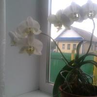 Подскажите, как называется этот цветок