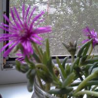 Помогите определить название цветка