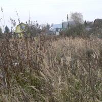 Как избавиться от многолетних сорняков и кустарника на запущенном участке?
