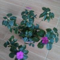 Скажите, как называется этот цветок?