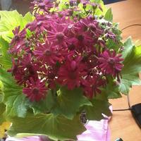 Как спасти цветок?