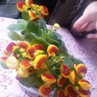 Подскажите, пожалуйста, название цветка