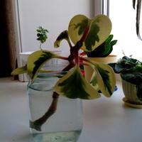 Что за цветок? Как его сажать и выращивать?