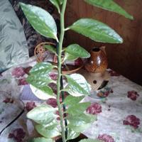 Скажите, что это за растение?