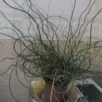 Помогите узнать название растения