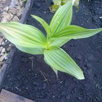 Помогите распознать растение!