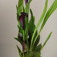 Подскажите название этого цветка!