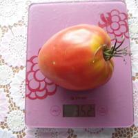 """Самый крупный  помидор """"Малиновое сердце"""""""