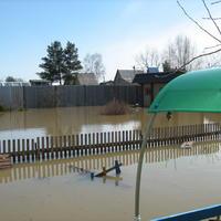 Как спасти дачные растения после наводнения?