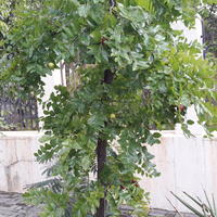 Помогите определить название растения