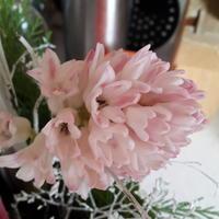 Подскажите, что это за цветок?