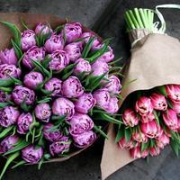 Помогите определить сорт тюльпанов