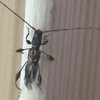 Помогите определить насекомое