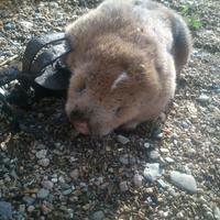 Помогите определить животное
