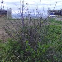 Плодовые деревья после зимовки сухие, листья практически отсутствуют. Что делать?