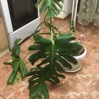 Подскажите название этого растения