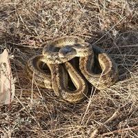 Что за змея?