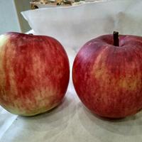 Помогите, пожалуйста, опознать сорт яблони
