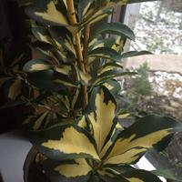 Привезла из Турции растение... Помогите узнать его название!