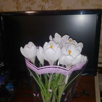 Жене подарили цветок... и сидим-гадаем, кто это?!