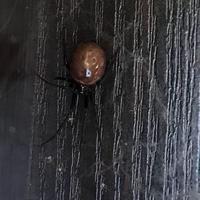 Что это за паук? Ядовитый он или нет?