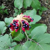Подскажите, как называется это растение!