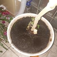 Помогите спасти цветок