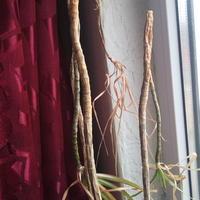 Как называется растение и можно ли ему помочь?