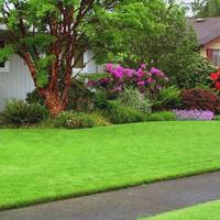 Рулонный газон - выбор не лентяев, а тех, кто знает цену времени