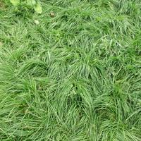 Красивый газон своими руками. Посевной газон.