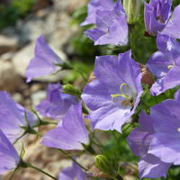 Какие цветы нужно сеять на рассаду в январе