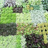 Красивый огород и урожай весь сезон. Повторные и уплотненные посевы и посадки