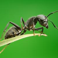 Эффективная борьба с муравьями на садовом участке