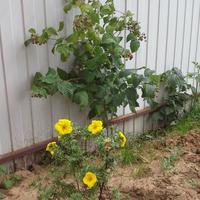 Какие почвопокровники посадить на глинистой почве?