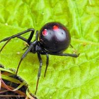 Как отпугнуть ядовитых пауков от огорода и дома?