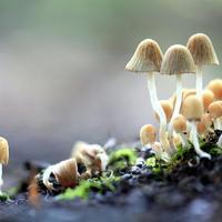 Кто такие грибы?
