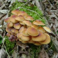 А я хожу по грибы... в сад!