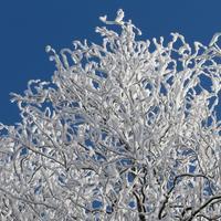 Тоска по снегу и морозу...