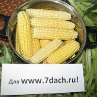 Варим кукурузу!!!