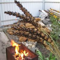 Самая вкусная в мире пшеница!