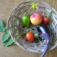 Вот так урожай овощей!